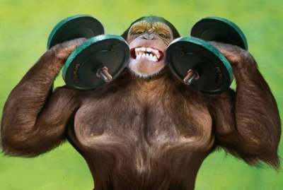 apefit hong kong muscle ape