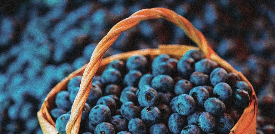 Finnish Blueberries from BerryTime